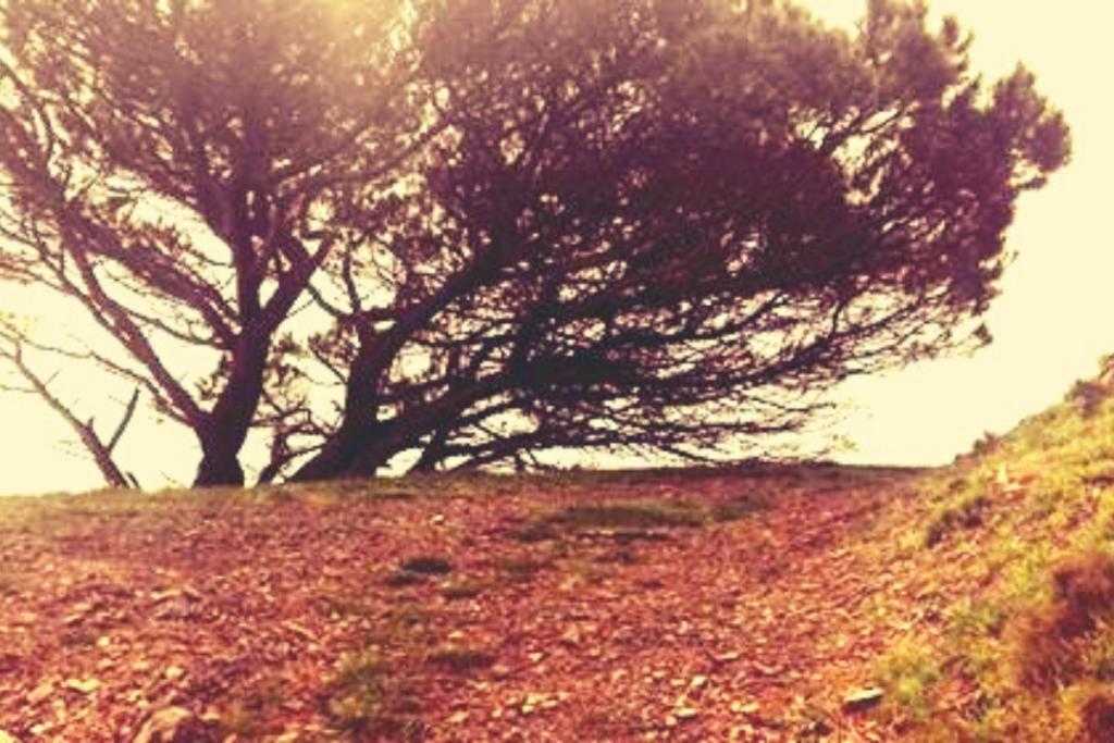 paesaggio pino