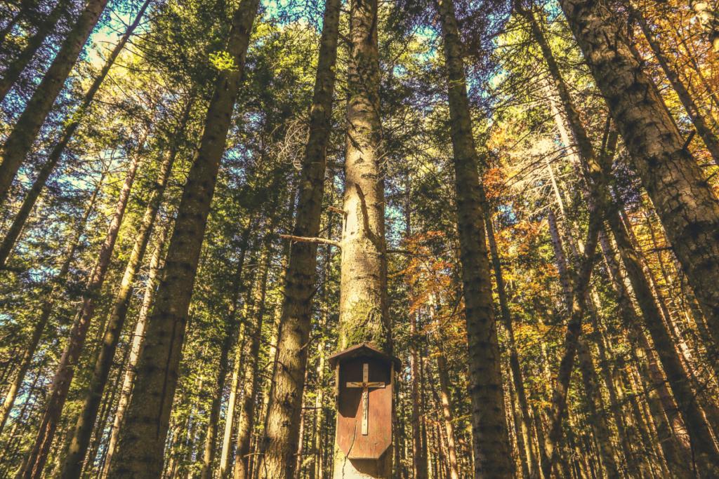 bosco di abeti