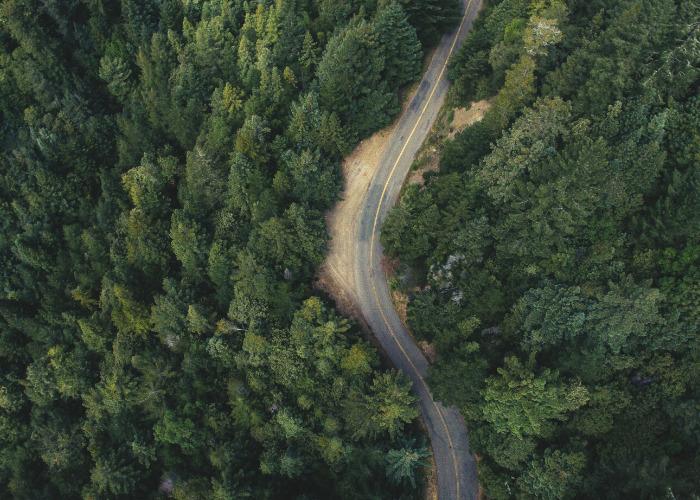 foresta con strada nel mezzo